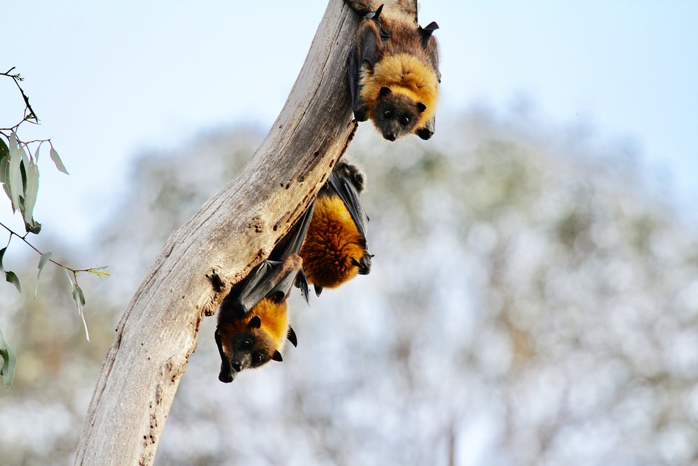 brown and black bats on branch