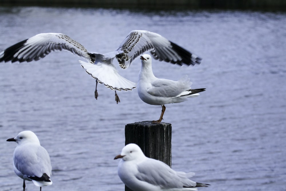 close-up photography of gull birds