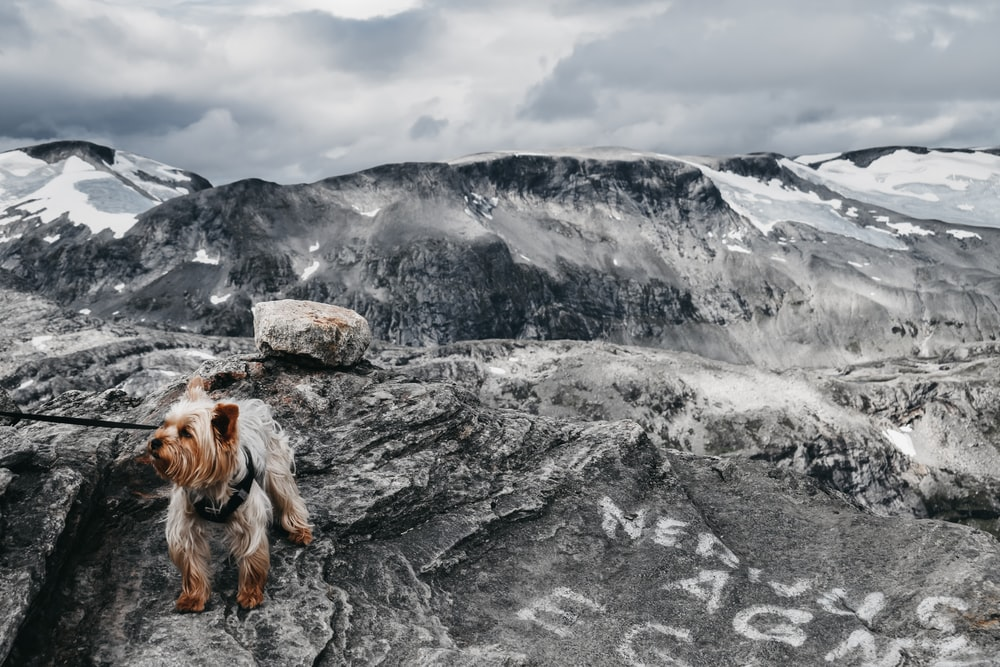 long-haired brown dog on rocky mountain