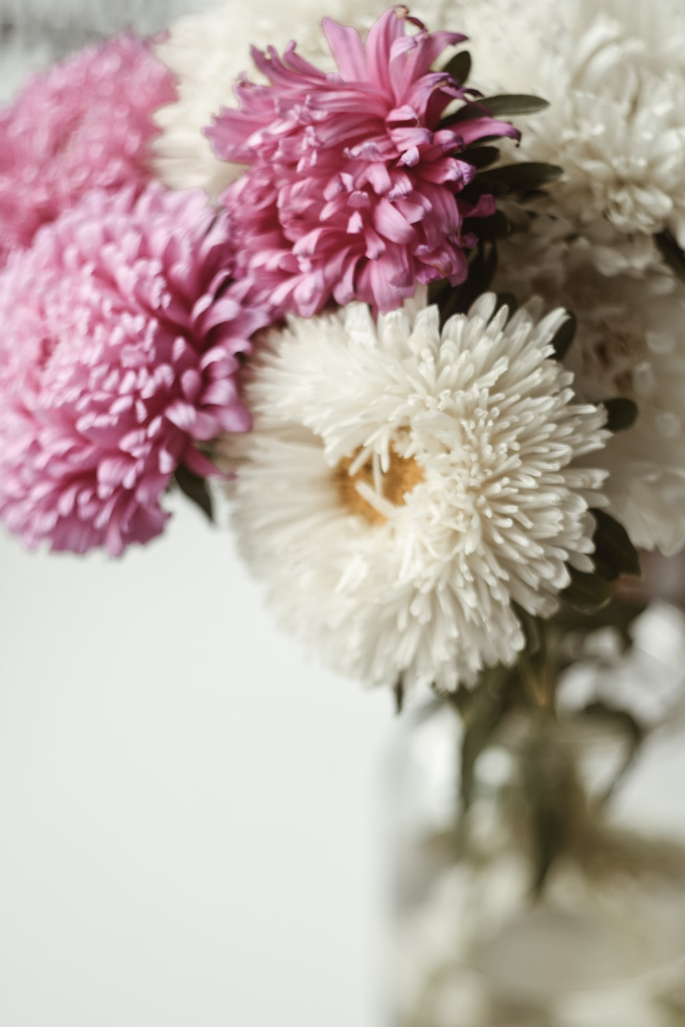 selective focus photography of white and pink petaled flower centerpiece