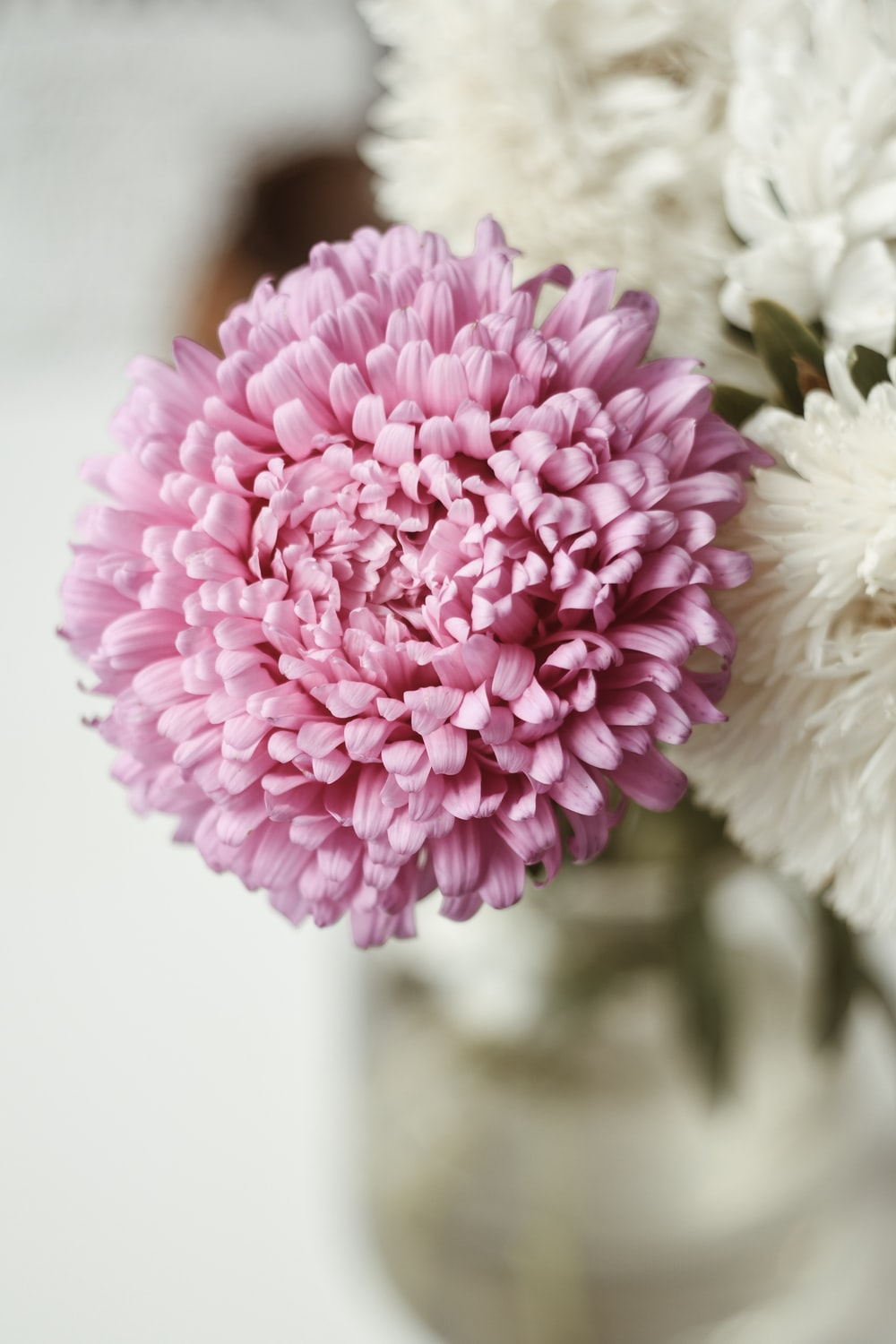 blooming pink and white flowers in vase