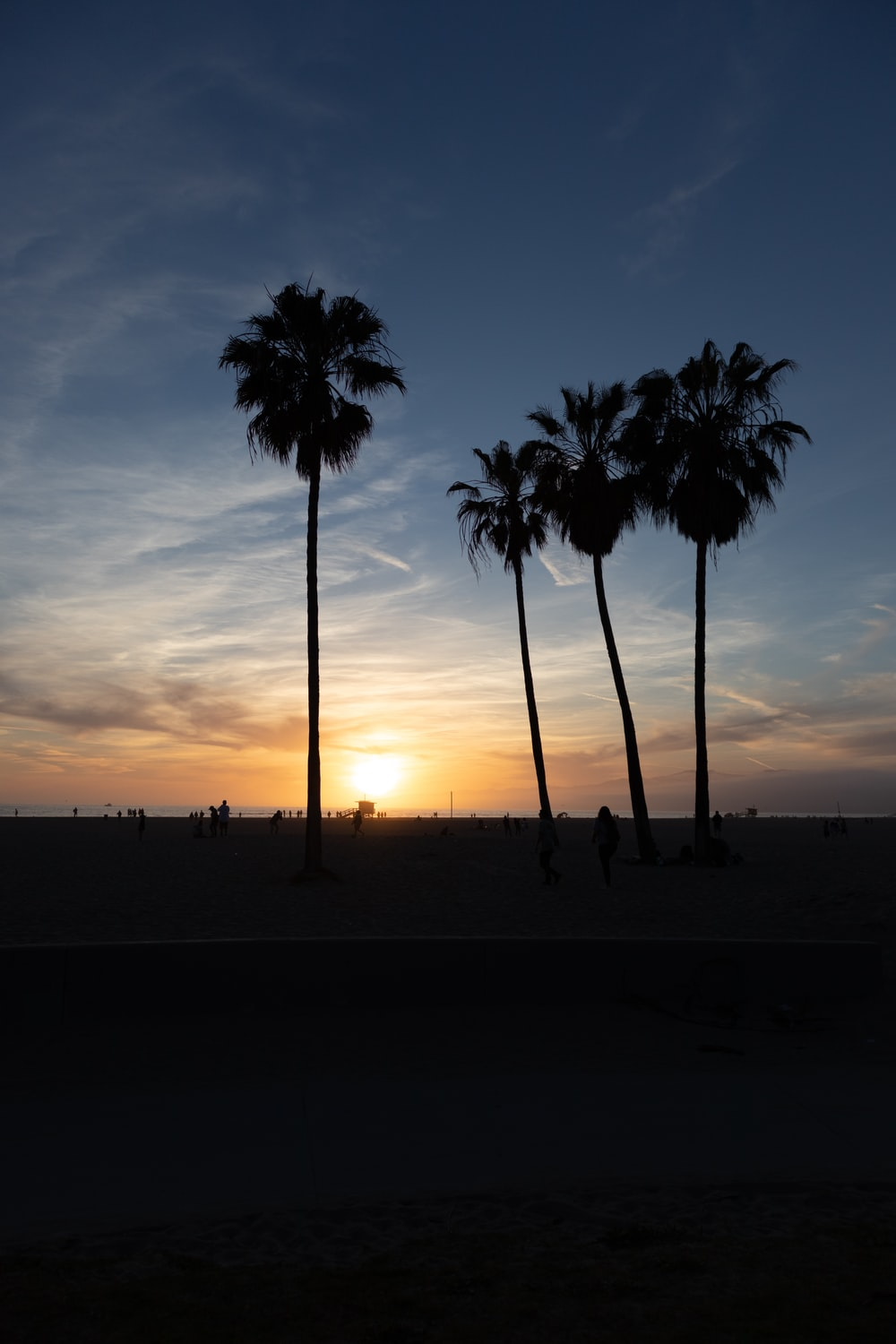 silhouette of coconut trees at sunset