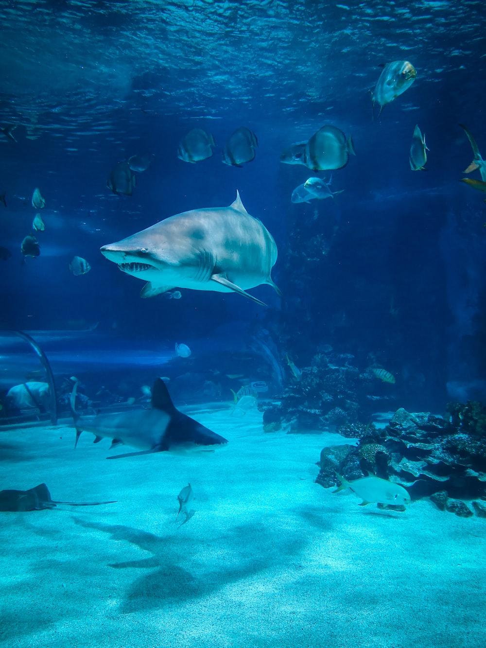 two gray sharks underwater