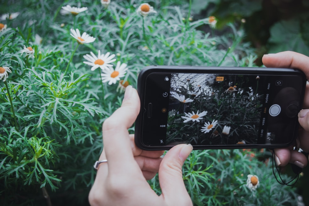 woman taking photos of flowers