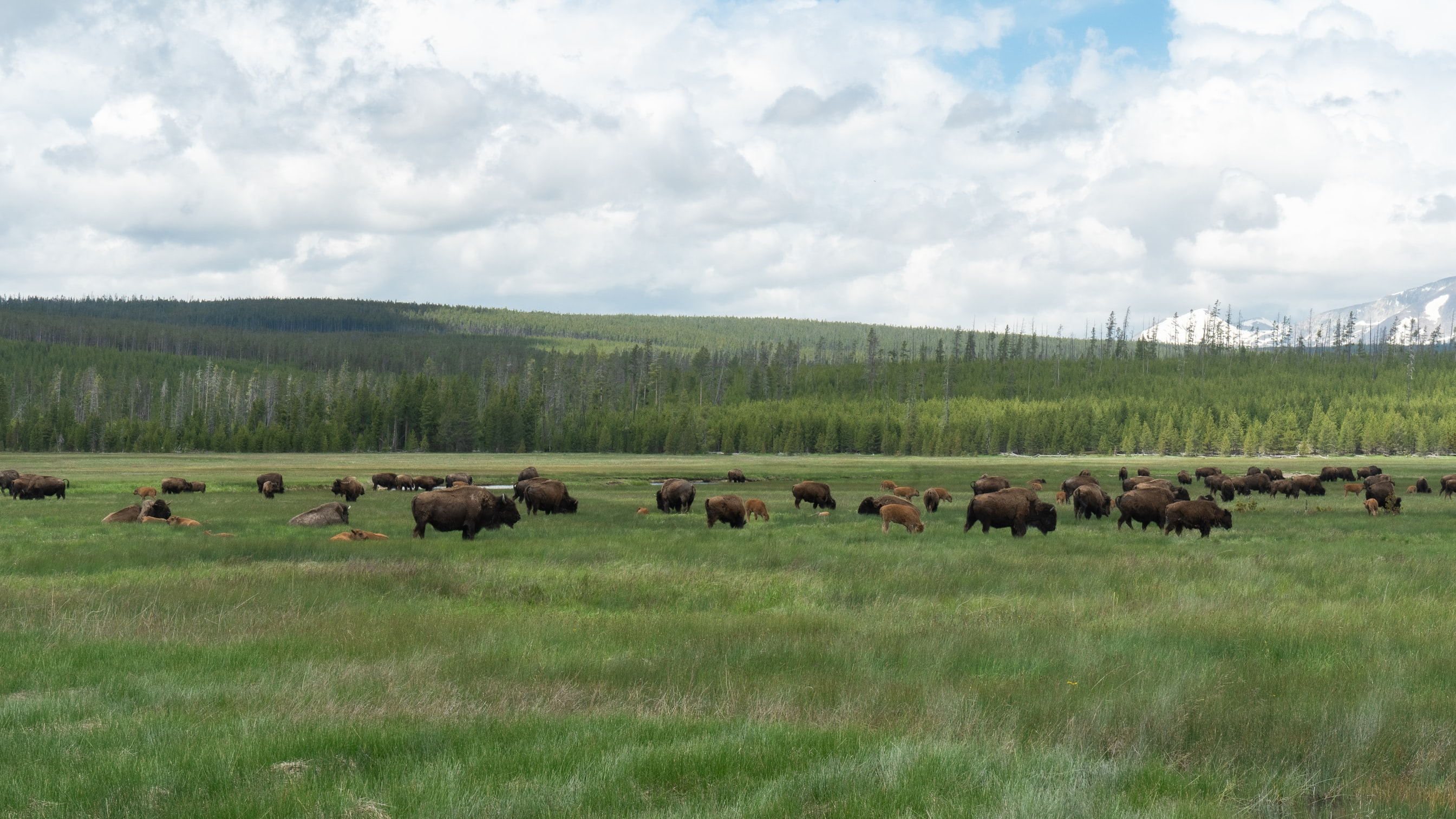Challenges For Rotational Grazing Practice: Views From Non-Adopters Across the Great Plains, USA