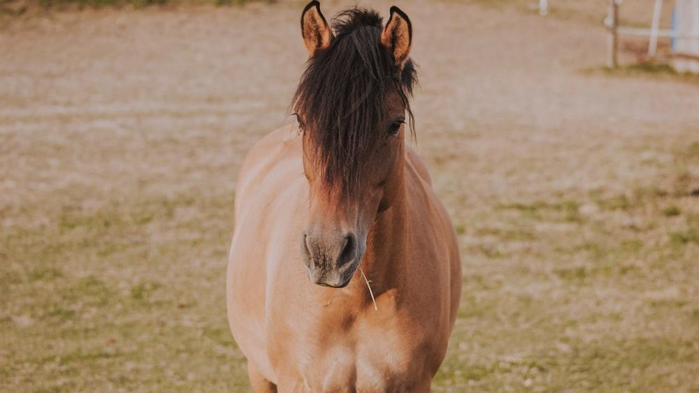 horse on open field