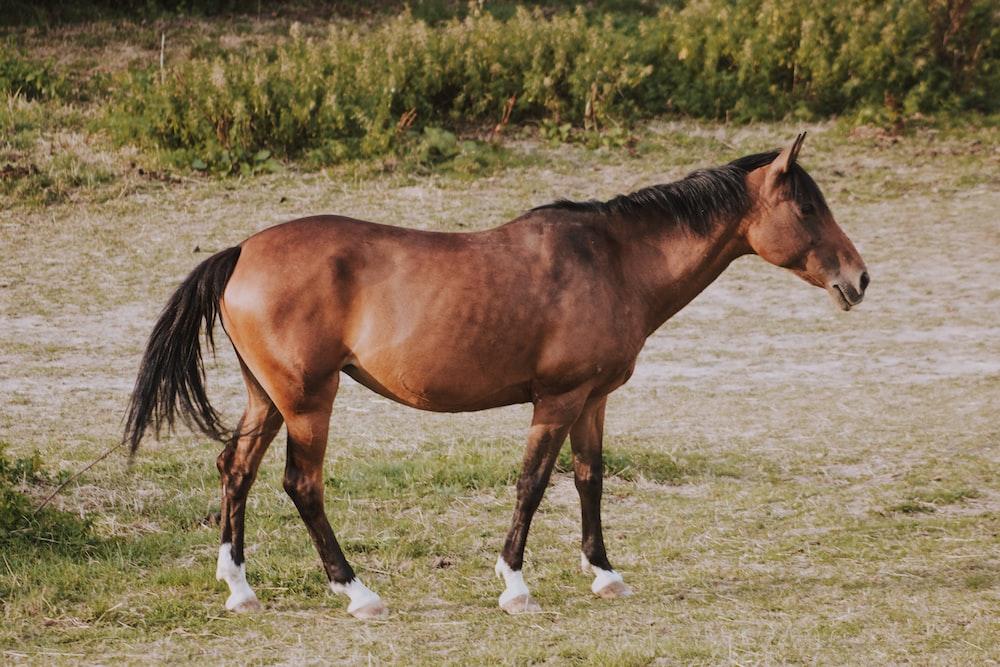brown horse standing near green plants