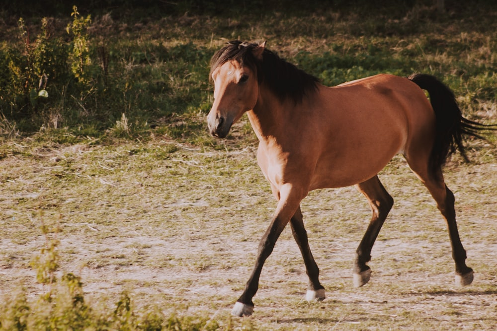 wildlife photography of brown horse during daytime