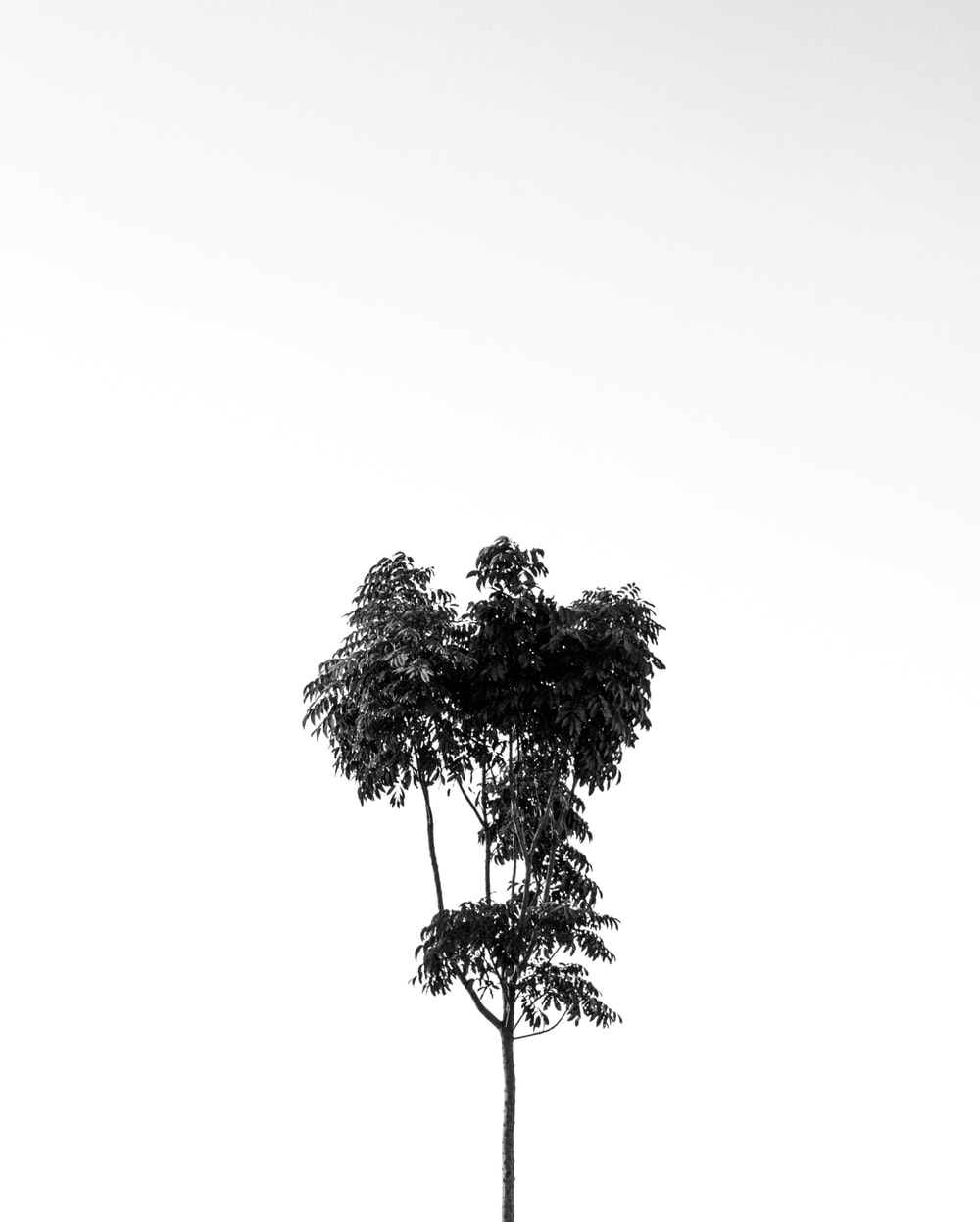 grayscale photo of tree