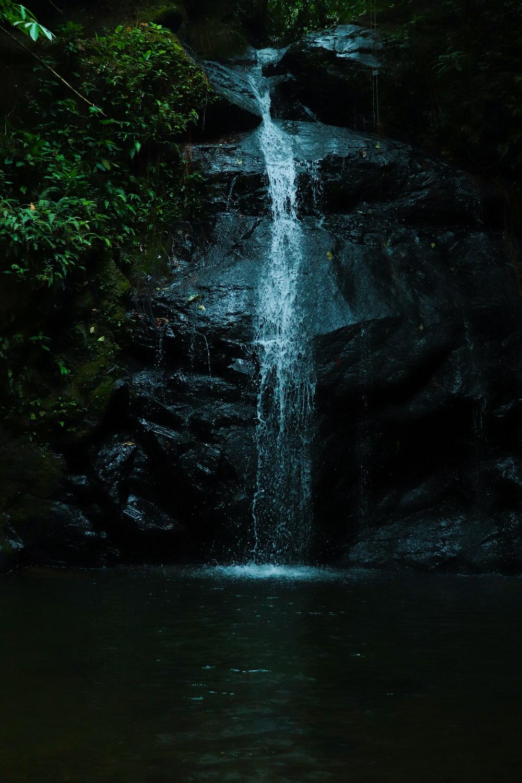 waterfalls near tall tree