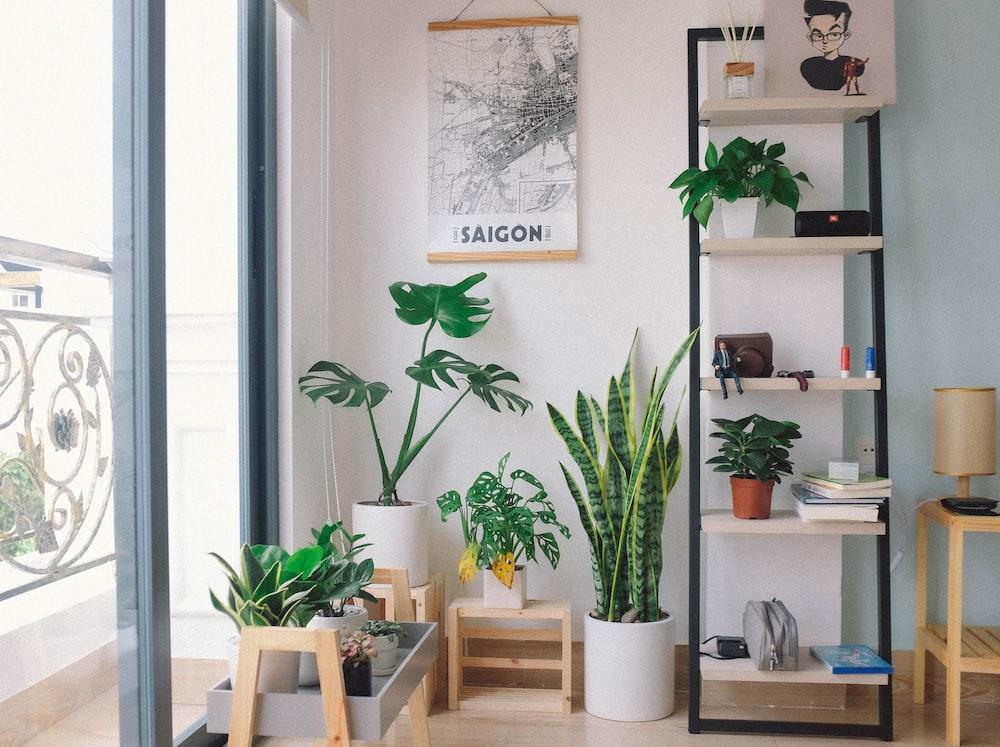 plants in pots between glass window and shelf