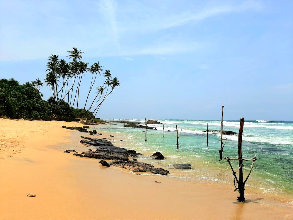 rock on shore near coconut trees under clear sky