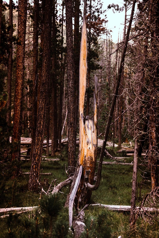 fallen tree on grass field