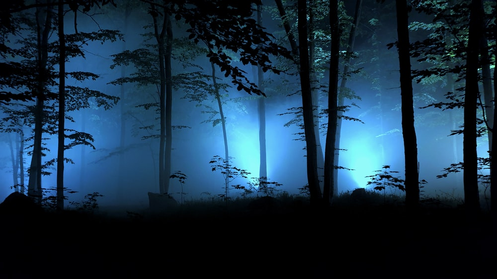 lined trees during nighttime