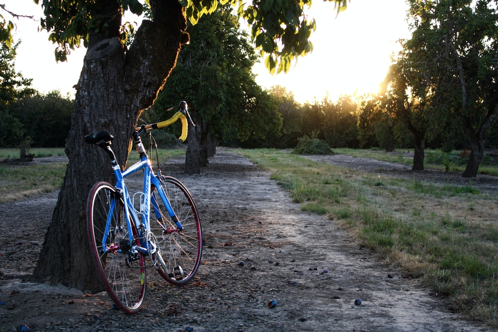 road bike leaning on tree trunk during golden hour