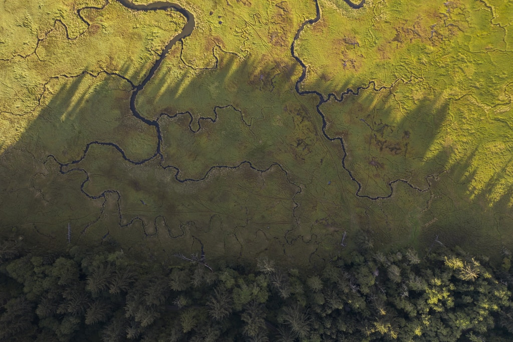 These coastal wetlands are located a few miles north of Lincoln City, Oregon. I can never resist taking drone photos of these meandering rivers and streams. I wanted to capture the old-growth forest that borders this ecosystem and the incredibly long shadows of the large pine trees.