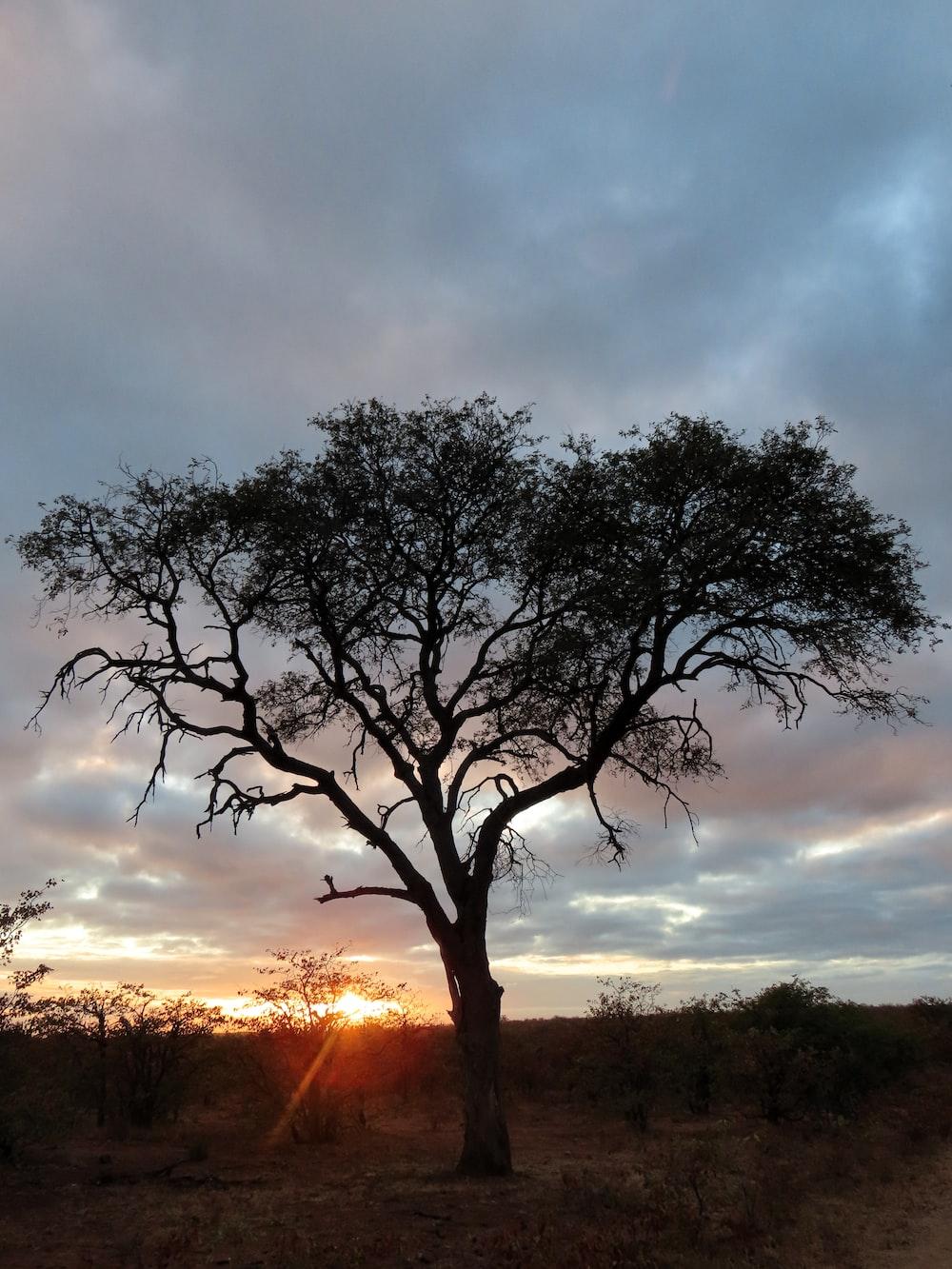 green tree photo across sunset