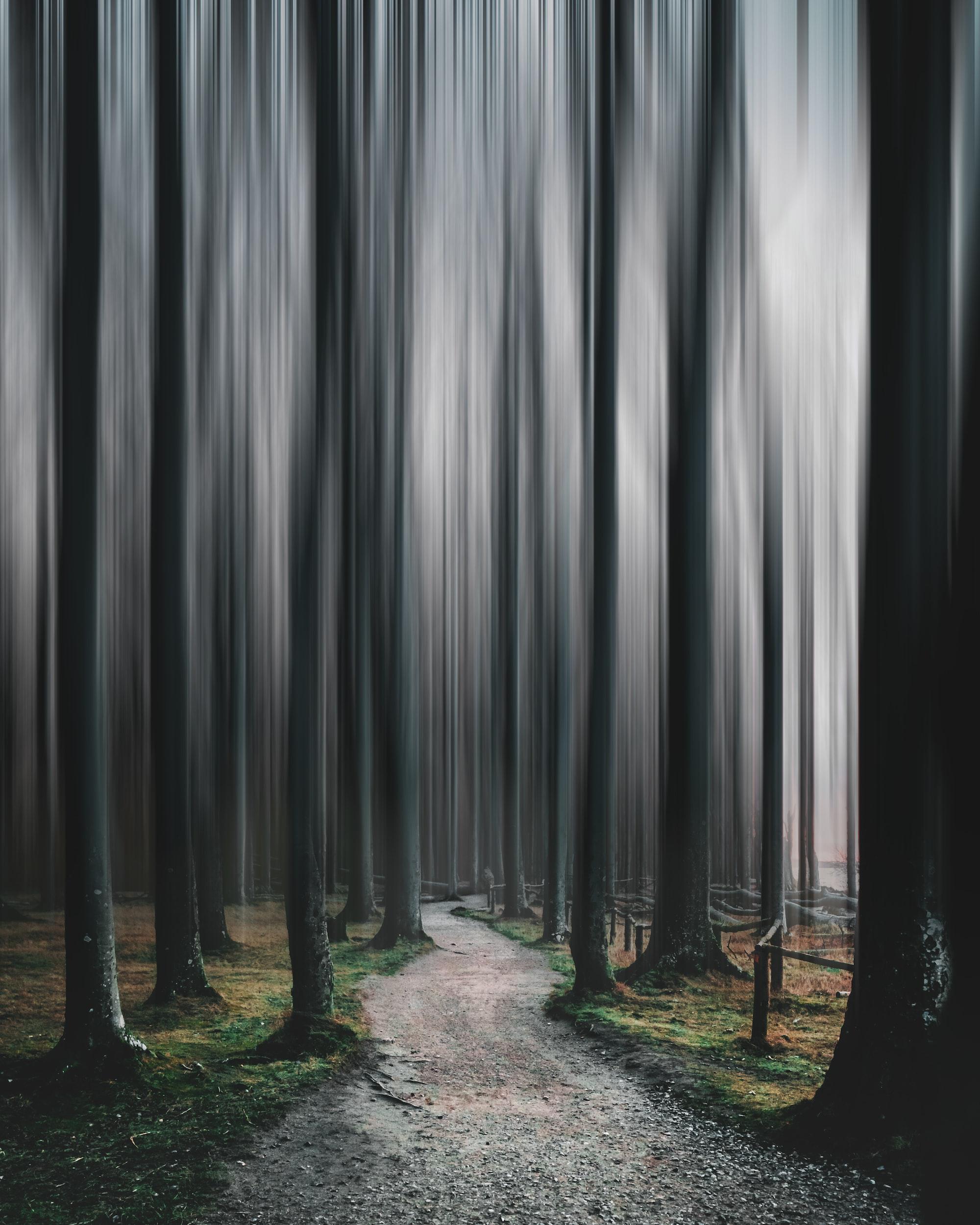 Potemnělý les s cestou uprostřed a vertikálně rozmáznutými stromy.