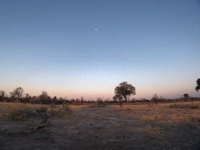 green tree botswana zoom background