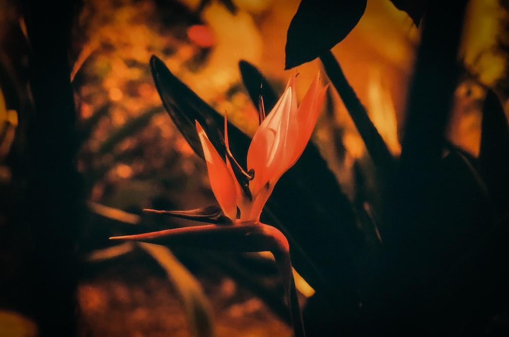 selective photo of orange petaled flower