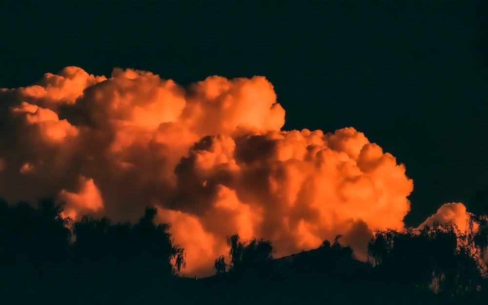 silhouette of trees under orange cloudy skies