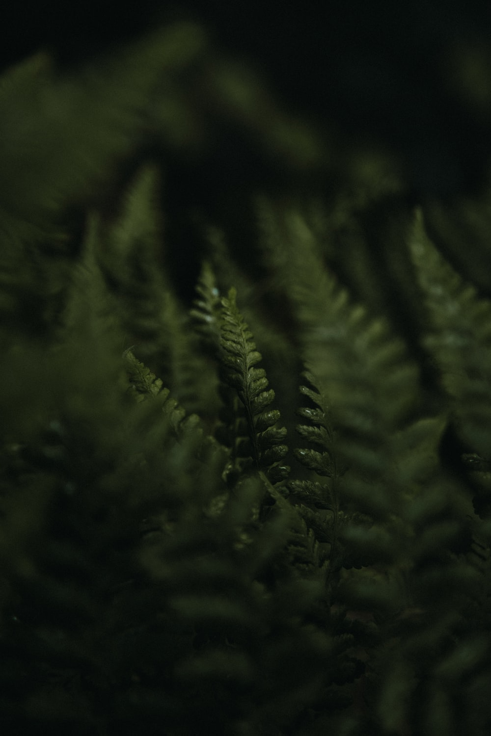 selective photo of fern plant