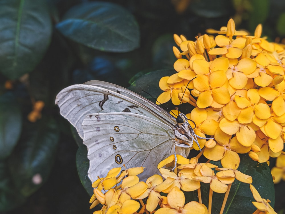 close-up of gray butterfly