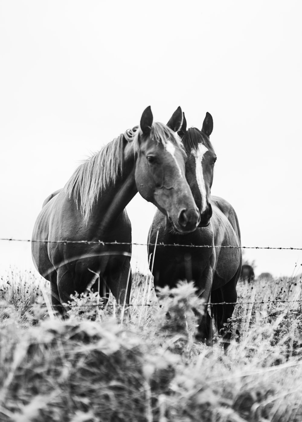 grayscale photo of horses