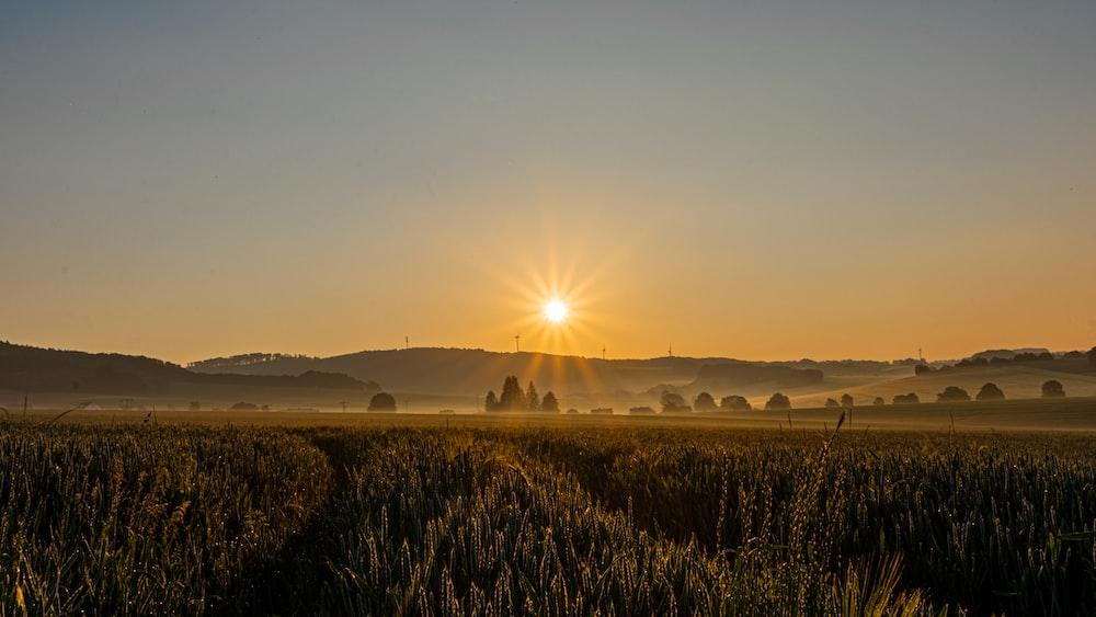 wet field during golden hour