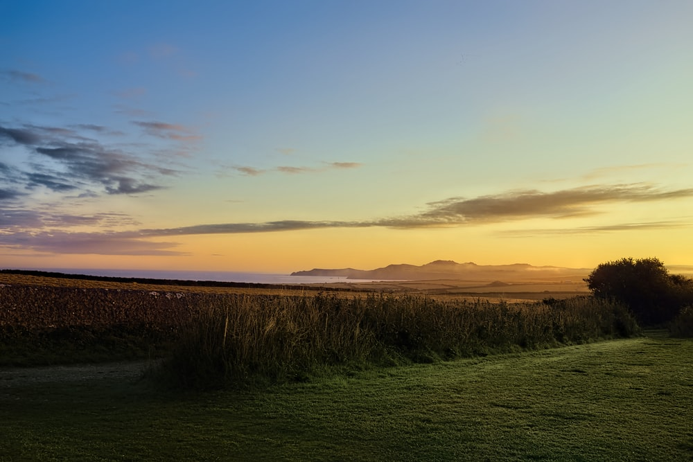 landscape photography of grass field during golden hour