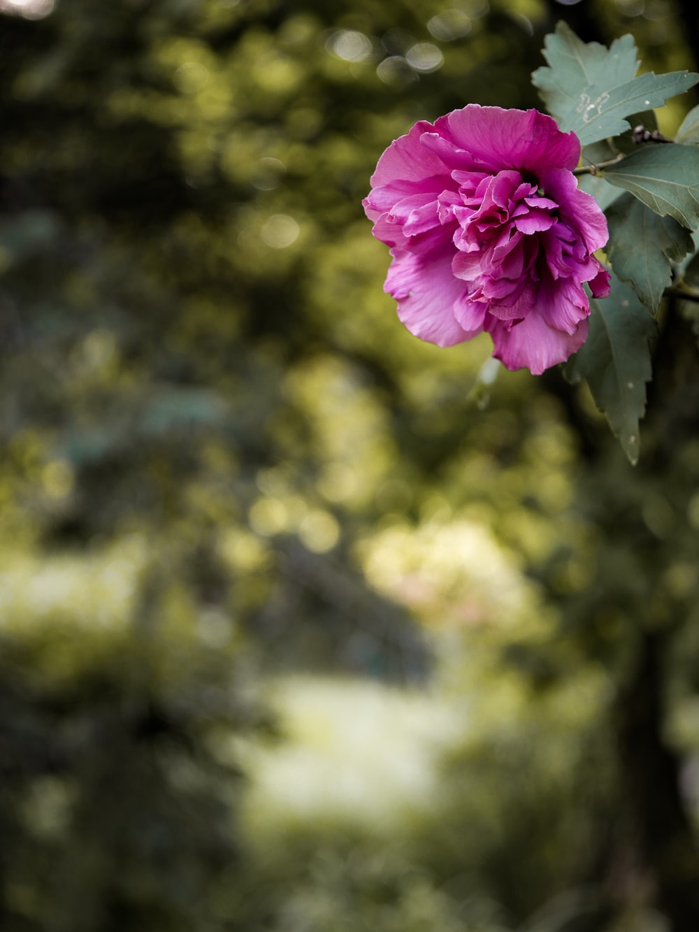 selective-focus photograph of pink flower