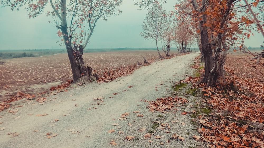 dirt pathway between trees