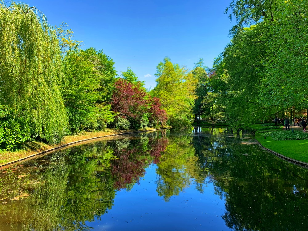 green trees and lakes scenery