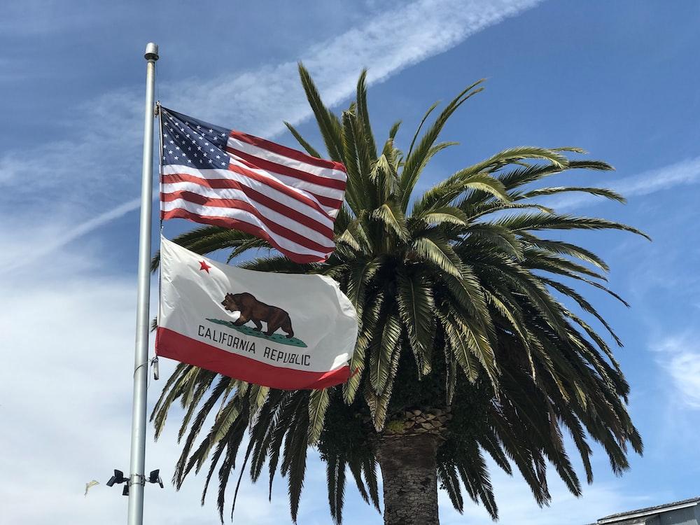 USA flag near tree