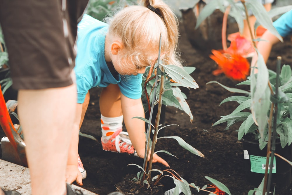 girl planting with green plant at daytime