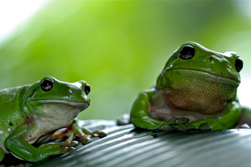 focus photography of green frog