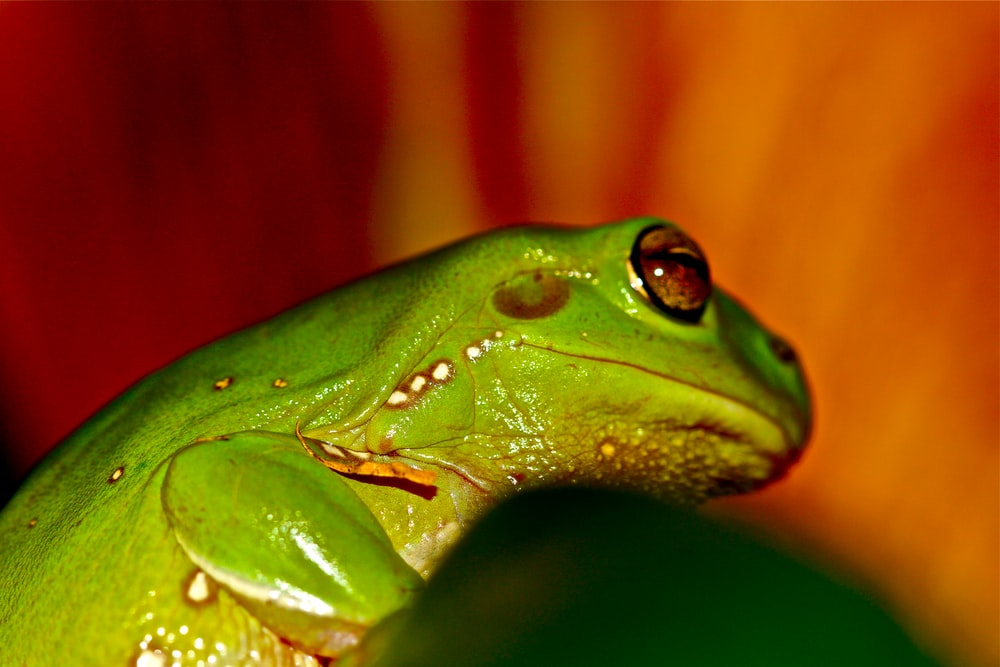 shallow focus photography of green frog