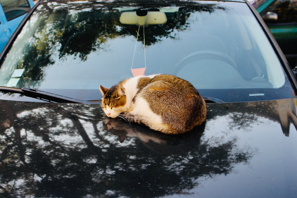 cat on a car during daytime