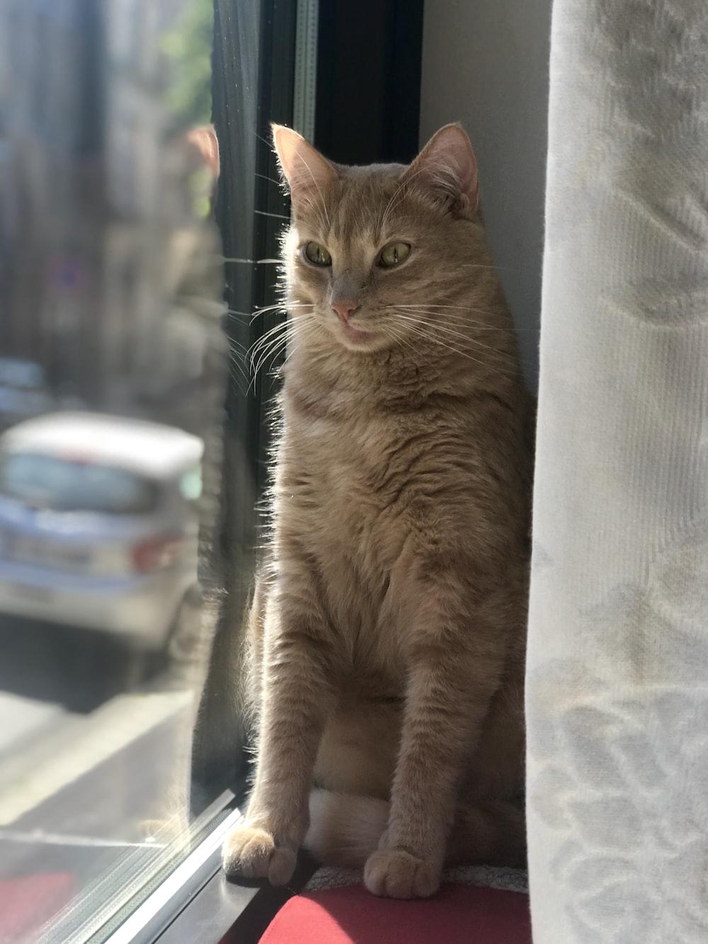 orange tabby cat sitting beside clear-glass panel