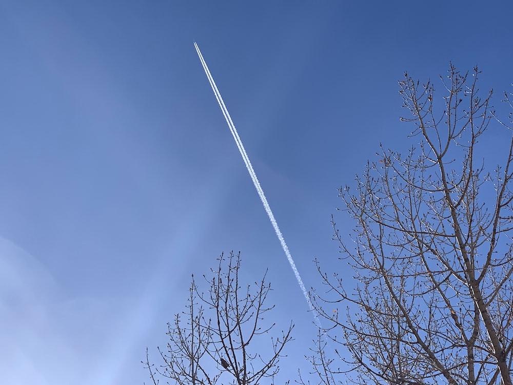 brown trees under blue sky