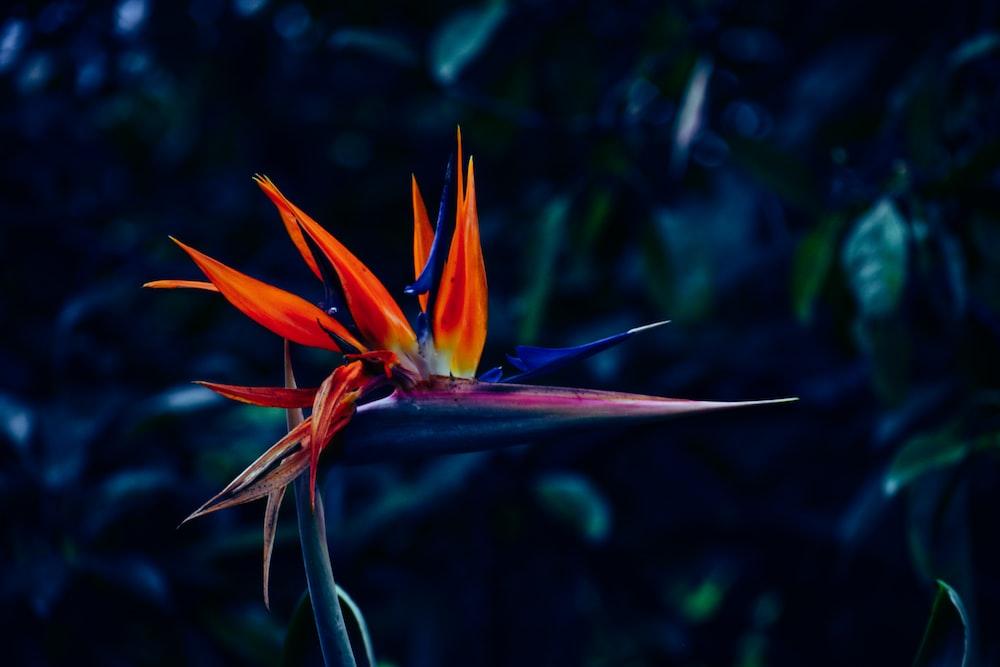 closeup photo of orange flowers