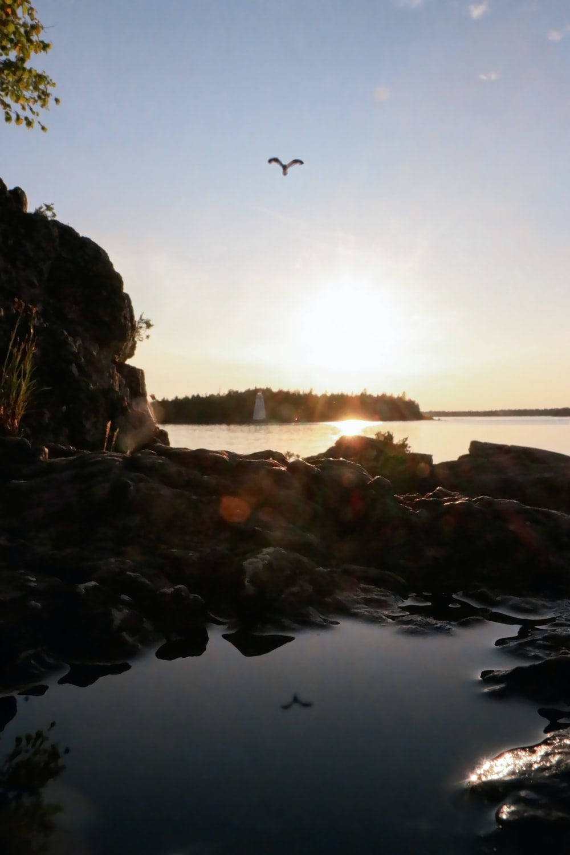 flying bird towards island