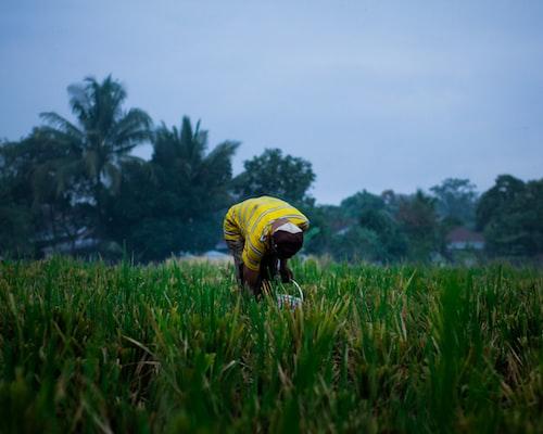 man on grass field photo
