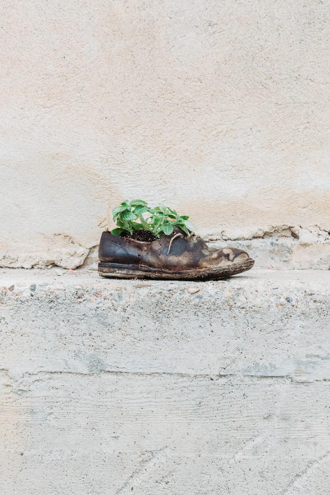 Shoe outside a vineyard in Novello, Italy.