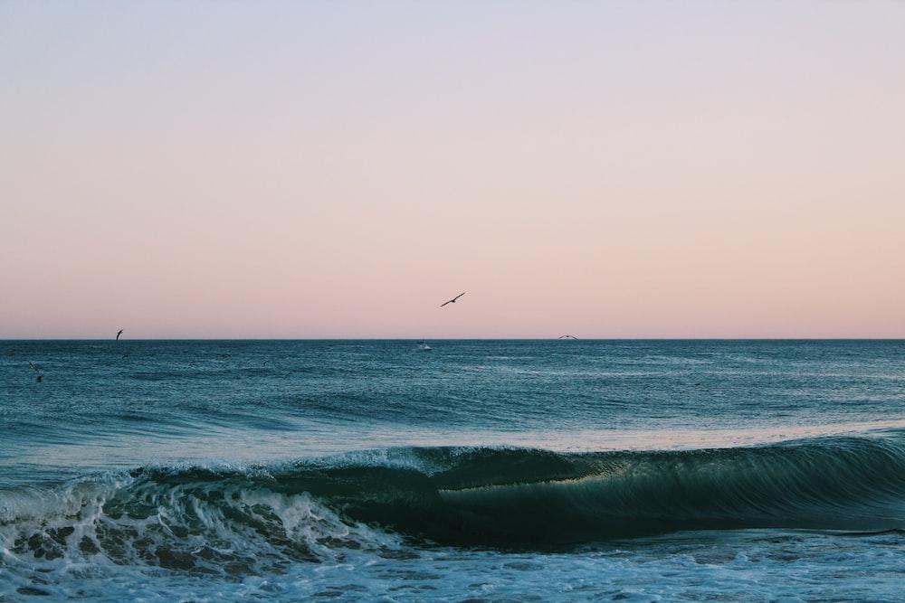 birds in flight over waves