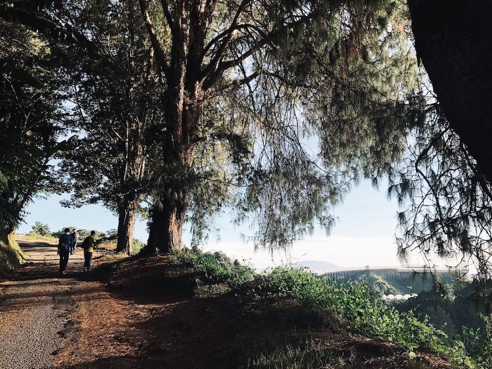 people on pathway near trees