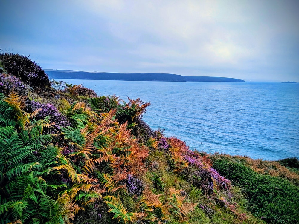 colorful plants on a cliff overlooking the sea