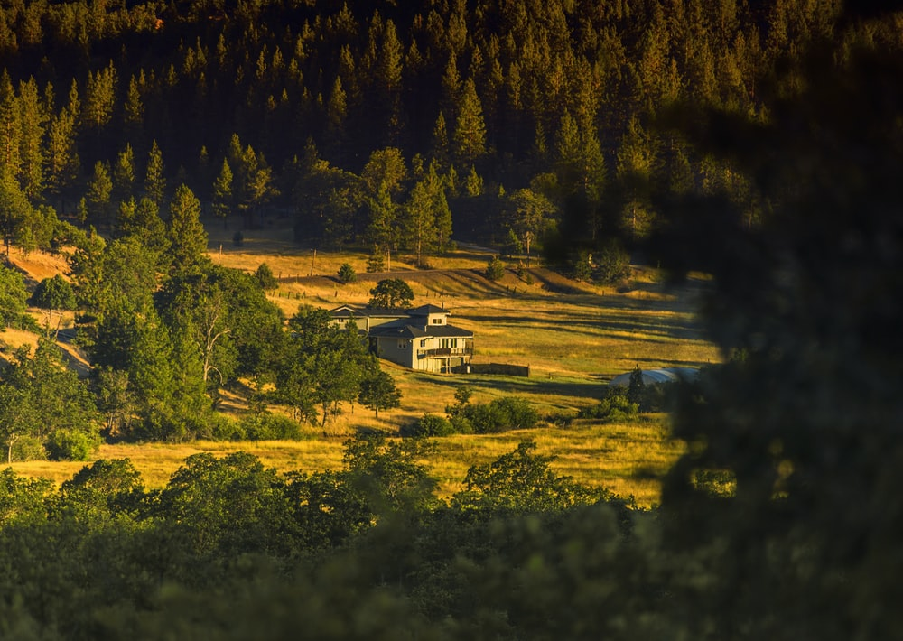 wide angle photography of white house surrounded by green pine trees