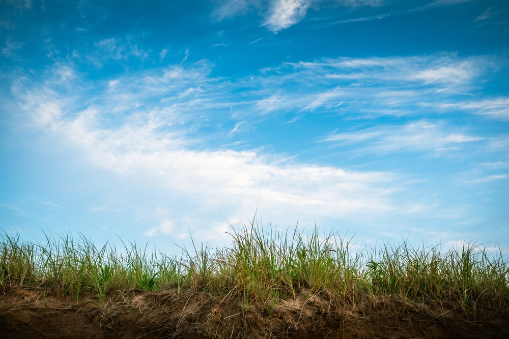 grass field under clear blue sky and white clouds during daytime