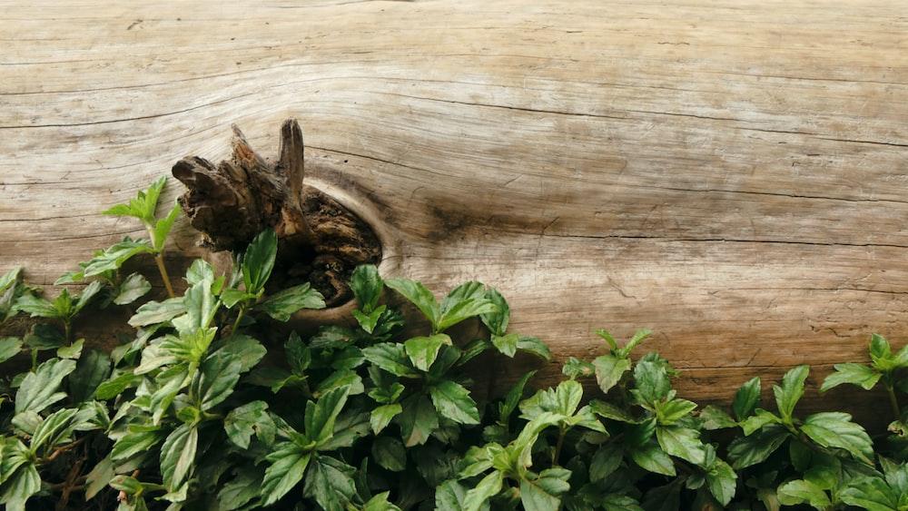 green leaves beside log